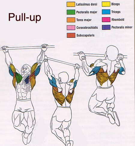 Doing 10-15 pull ups with 3-5 sets will increase your muscle strength and  burn that back fat you ve always wanted to get rid of! It is a solid workout  for ... b0ff6bae3e17f